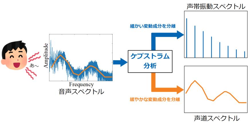 ケプストラム分析で声帯情報を得る説明図